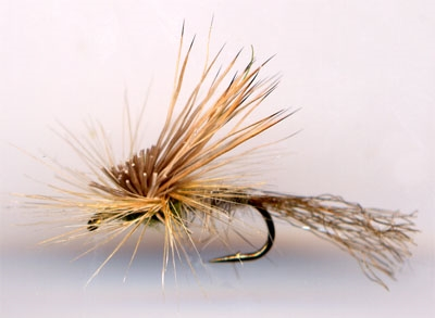Click to view Tony's EC Caddis!
